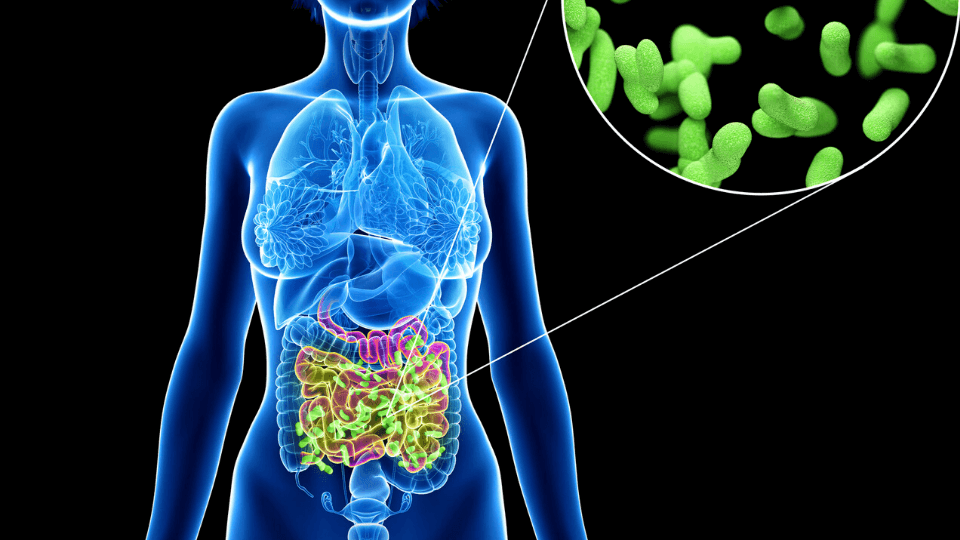 benefits good ut bacteria - Healthy Gut Bacteria and Ways to Improve the Gut Microbiome