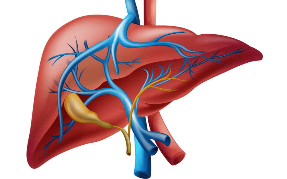 liver disease treatments - Fatty Liver: Causes, Symptoms, Diagnosis, and Treatment